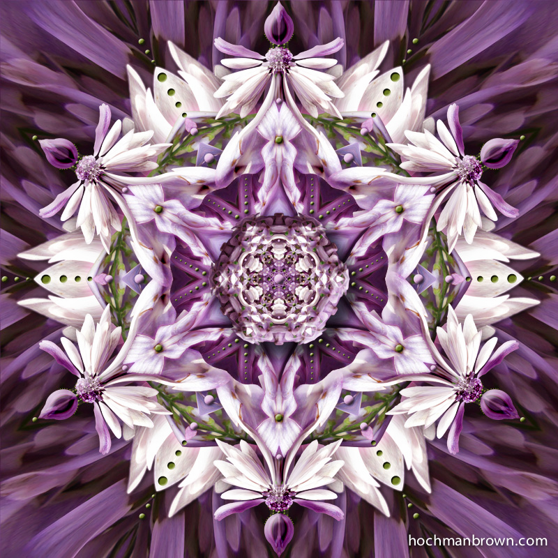 Lilacs in Gloom