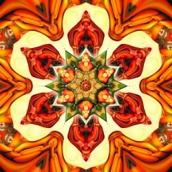 Erythrina On Fire