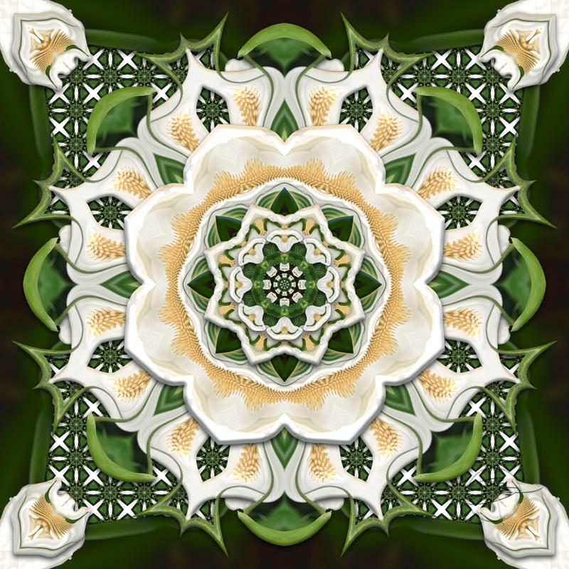 Peace Lily Nouveau