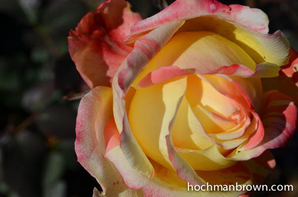 fiesta-rosa_0068_400wm
