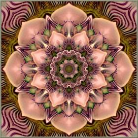 Passiflora Indulgence