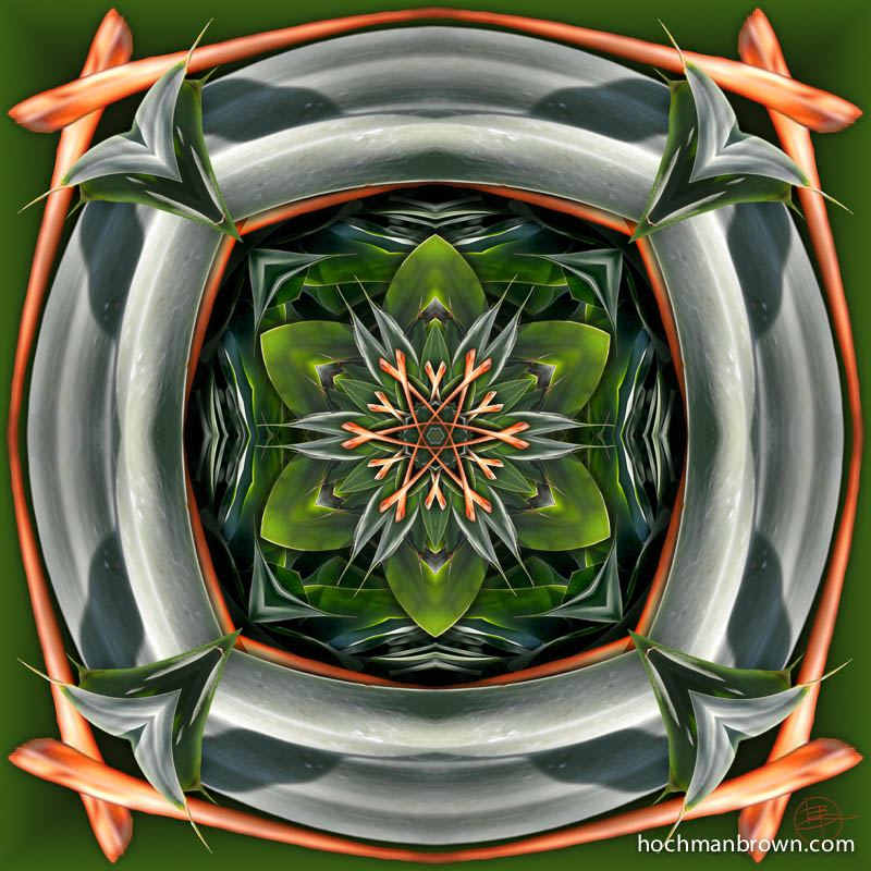 Agave Solstice
