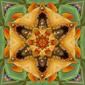 Orange Iris Bittersweet