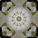 Calla Spin_artwork_800wm