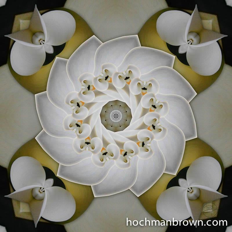 Cochlear Calla Lily_artwork_800wm