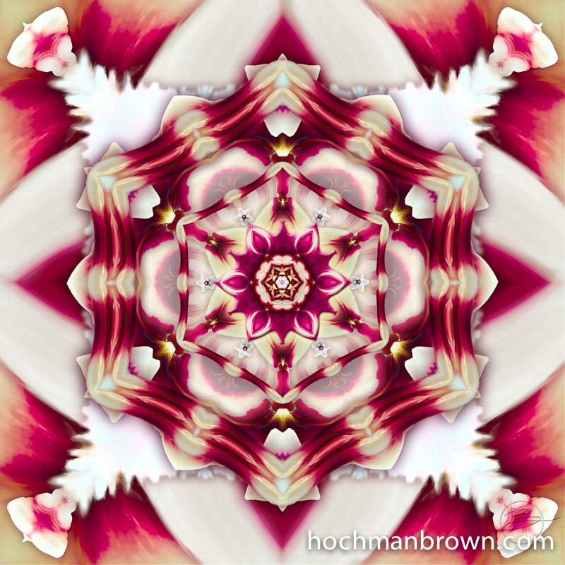 Hoya Luminosity_artwork_800wm