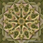 Misted Cabbage_artwork_800wm