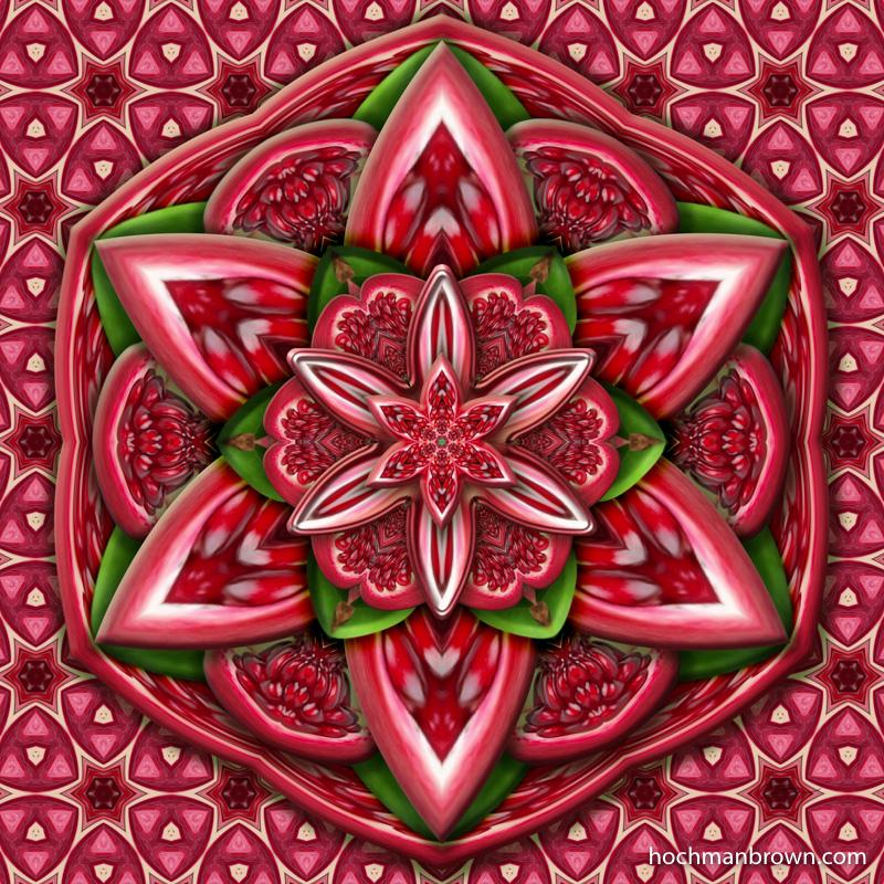 Pomegranate_artwork_800wm