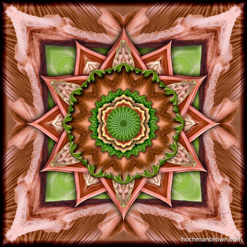 Shiitake & Cabbage_artwork_800wm
