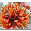 """Base image (center) and two """"foundlings"""" for """"Erythrina On Fire."""""""